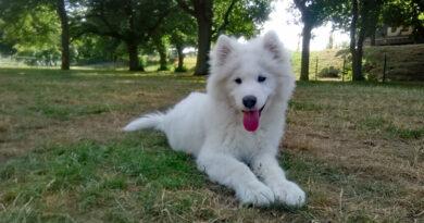Ny hundrastgård på Söder