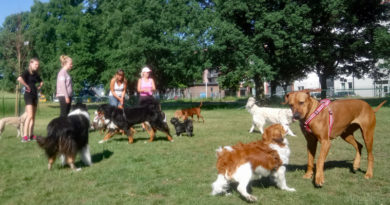 Gåsebäcks hunddagis