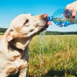 Sommar sol och varmt – tänk på hundarna