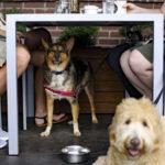 Hunden på restaurang och café