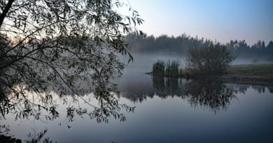 Filborna skogspark - Barnens skog