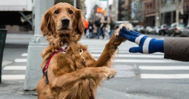 Hälsa på hundar