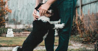 Hälsa på hundar – eller inte