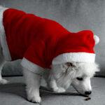 Tänk på hundarna i jul